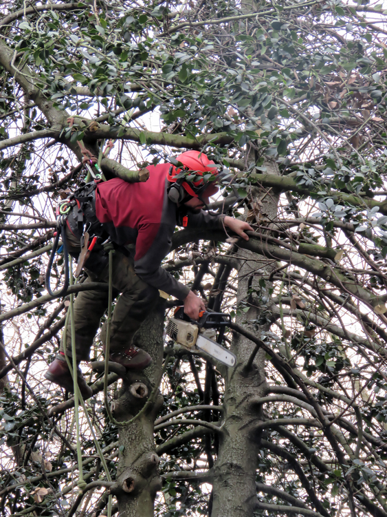 Jackson TN Tree trimming pruning services