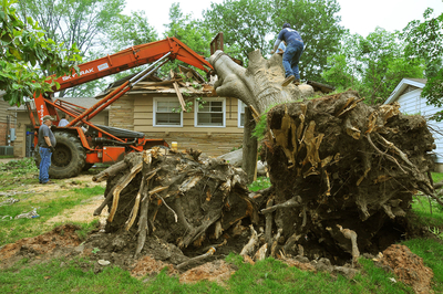Jackson TN Tree services